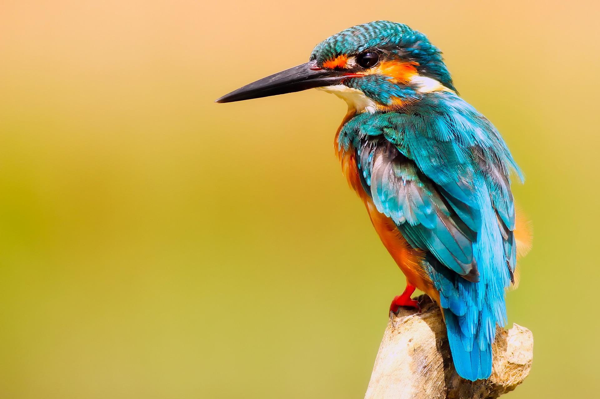 Fauna v okolí naších riek a jazier-Vtáctvo